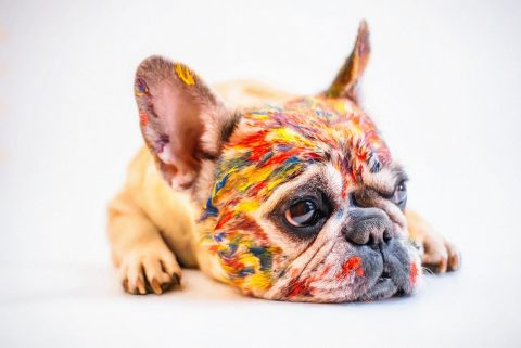 The Ultimate Guide To Choosing Pet-Friendly Colour